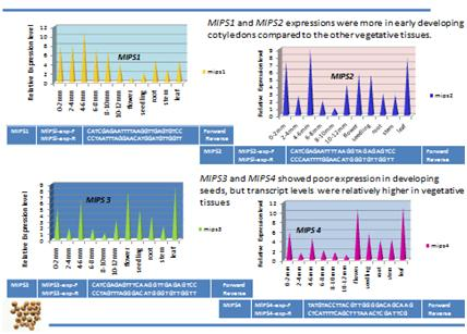 Full length sequences of phytase and myo-inositol phosphate synthase (MIPS) genes