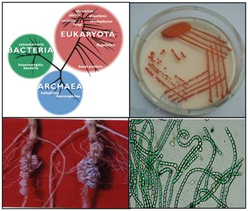 Microbial Domains for Agricultural Application