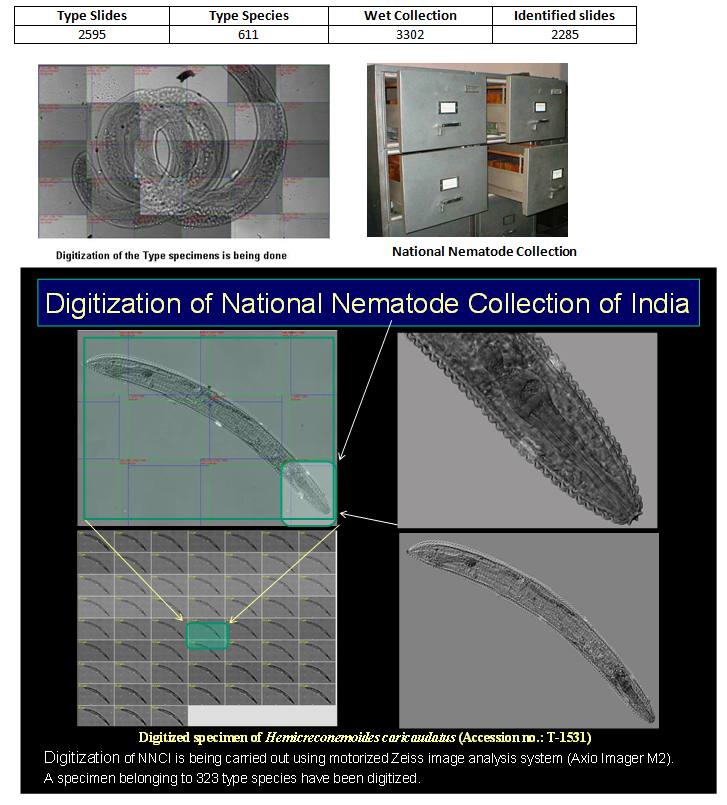 Established the National Nematode Collection of India (NNCI)