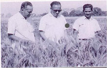 Shri V.S. Mathur and Dr. M.V. Rap with Dr. M.S. Swaminathan